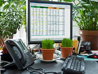 Plantas venenosas peligro en la oficina ooohmktdigital for Plantas decorativas interior venenosas